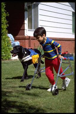 USA, exercise, run, running, canine companion, disabled, disabled sport, dog, sport, pet, animal, fun